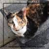 Bernice_posted_17_une_2020.png